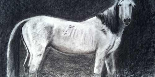 Image of a black and white horse by michelle with Nancy Cuevas Beginning Drawing Lessons