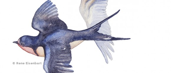 image of water color swallows by Rene Eisenbart